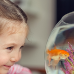 Don't Flush Your Goldfish. Say Goodbye.