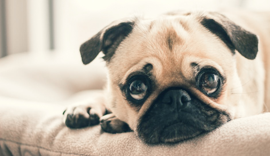 How Pets Mourn Differently Dog