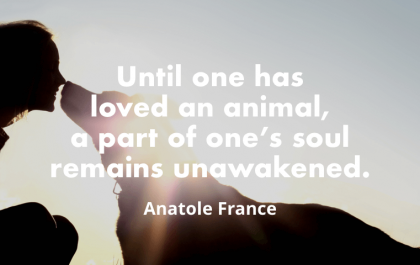"""Until one has loved an animal, a part of one's soul remains unawakened. "" – Anatole France"