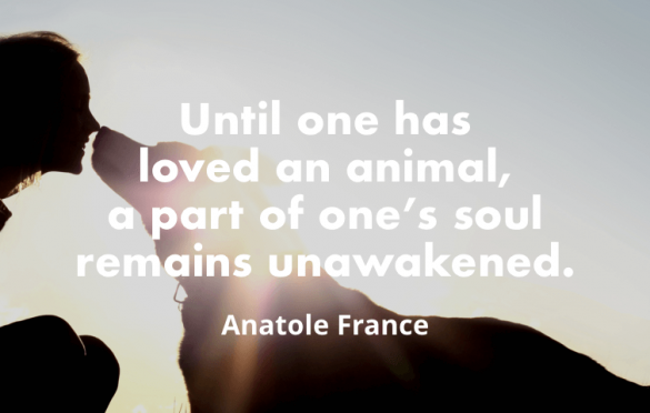 """""""Until one has loved an animal, a part of one's soul remains unawakened. """" – Anatole France"""